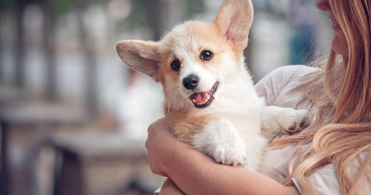 Dog Will Enhance Your Mood